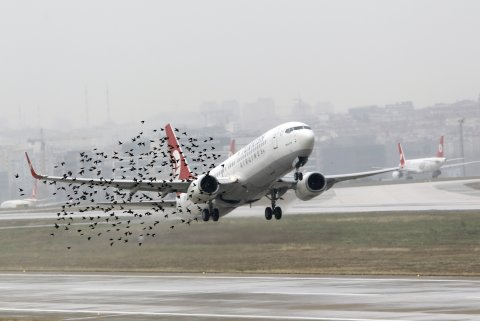airliner takes off with birds